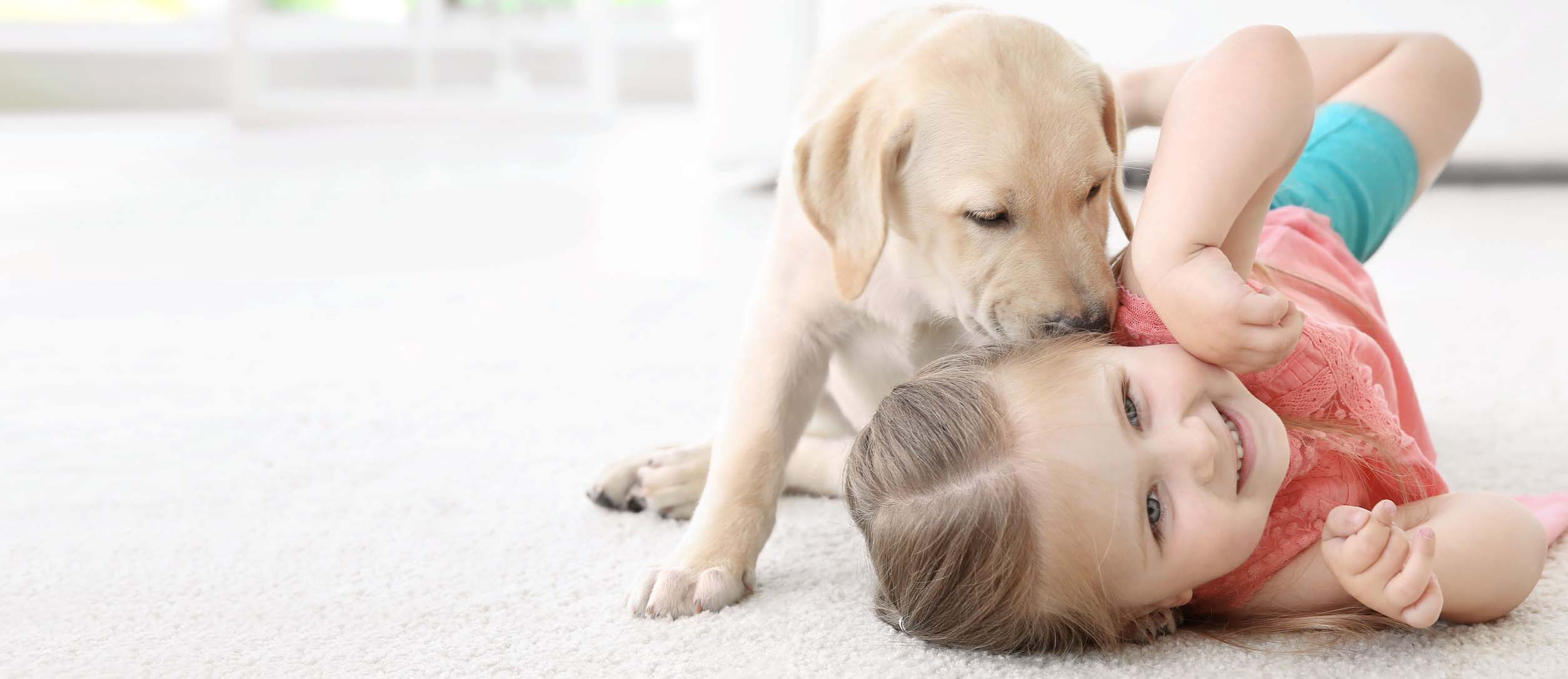 Eco-safe carpet cleaning